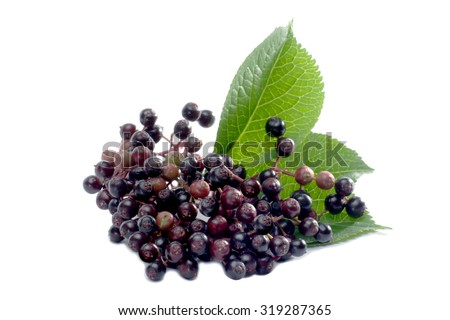 Macro shot elderberries isolated on white - stock photo