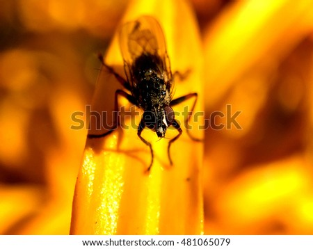 Macro shot from a fly at a yellow flower in The Netherlands