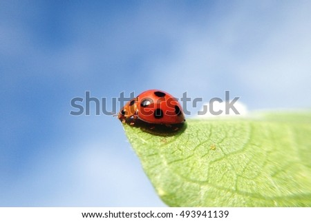 Macro shot ladybug on leaf and sky wallpaper background