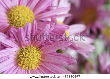 Macro shot of a beautiful pink flower. - stock photo