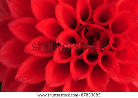 Macro shot of a Dahlia flower - stock photo