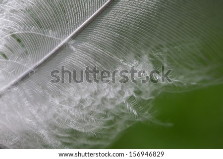 Macro shot of a feather - stock photo