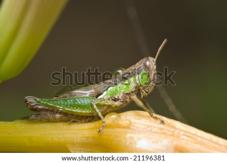 Macro shot of a grasshopper with dewdrops on it