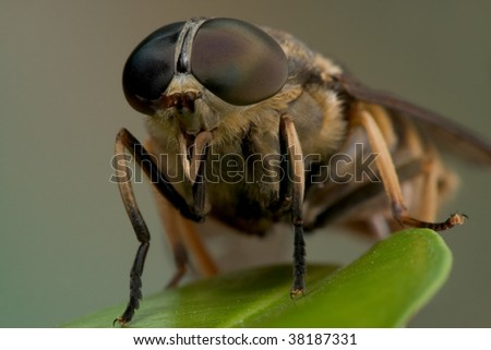 Macro shot of a horse-fly - stock photo