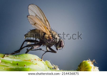Macro shot of a housefly standing next to an aphid on a plant. - stock photo