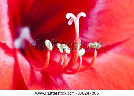 Macro shot of a red flower interior - stock photo