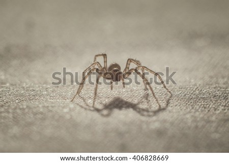 macro shot of a spider on a piece of cloth - stock photo