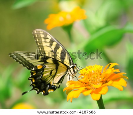 Macro shot of a swallowtail butterfly on a bright flower