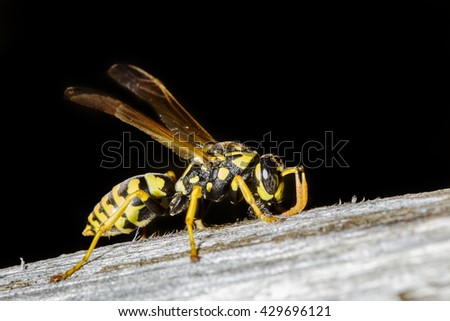 Macro shot of a wasp resting on wooden surface - stock photo