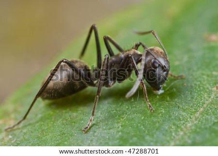 Macro shot of an ant eating on a leaf