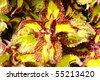Macro shot of beautiful tropical leaves - stock photo