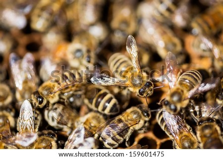 Macro shot of bees swarming - stock photo