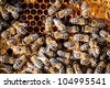 Macro shot of bees swarming on a honeycomb - stock photo