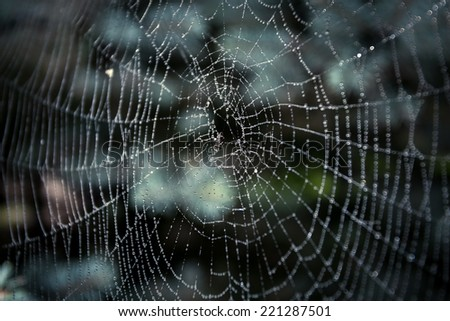 Macro shot of big spider web covered with drops - stock photo