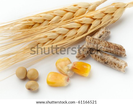 macro shot of corn, wheat, soy beans and wood pellets shot on white background with soft shadow - stock photo