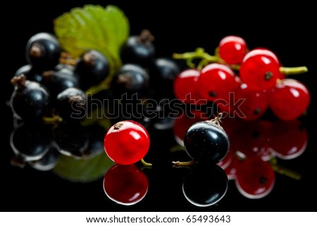 Macro shot of currant branches over black reflective plane - stock photo