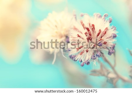 macro shot of cute fluffy flower bud