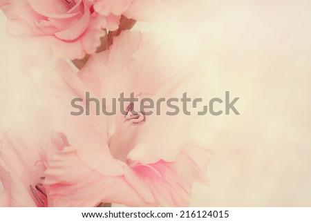 Macro shot of Gladiolus flowers. - stock photo