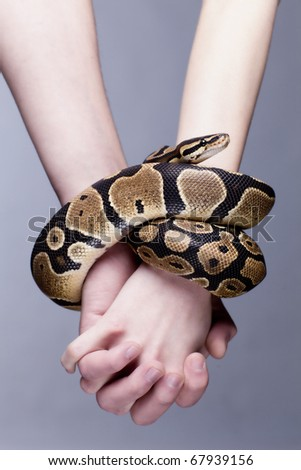 Macro shot of man and woman holding each others hands, which are connected with royal python snake; grey background, a lot of copyspace available - stock photo