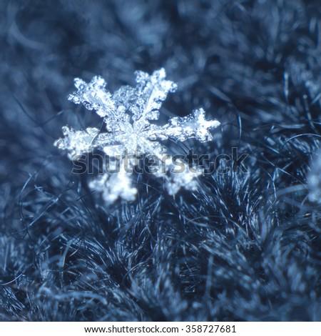 Macro shot of real snowflake - stock photo