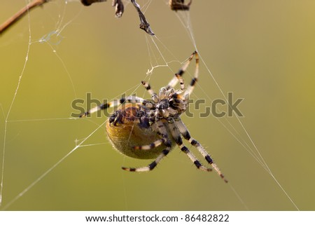 Macro shot of the bottom side of a spider in a web holding several threads