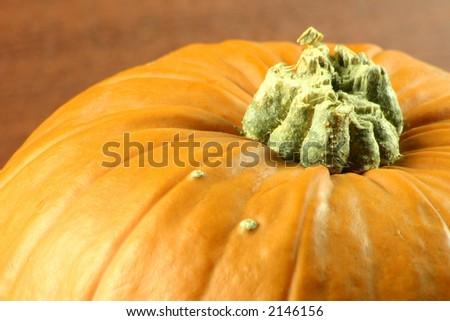 macro shot of the top of a pumpkin - stock photo