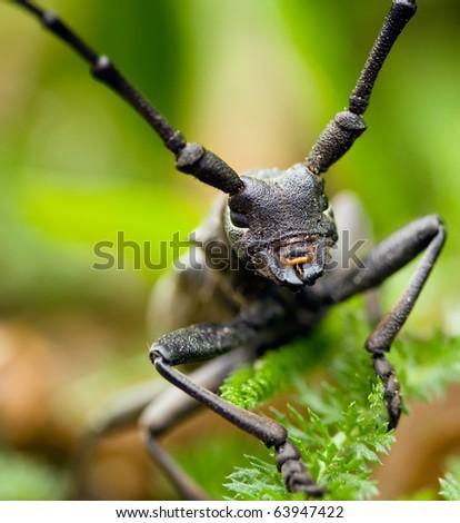 macro shot on bug in green background - stock photo
