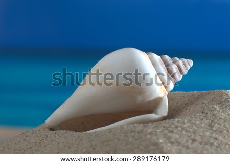 Macro shot sea snail on the beach in front of an azure sea - stock photo