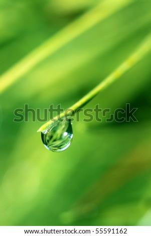 Macro shot waterdrops on green leaves - stock photo
