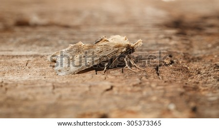 Macro side view of moth on wood