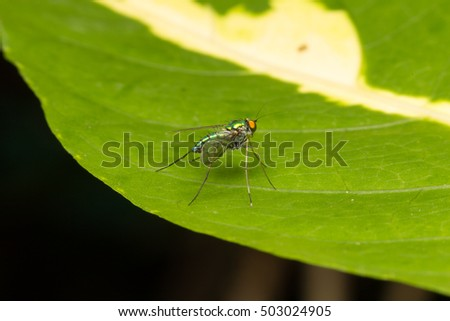 Macro, small insects that fly perched on a leaf.