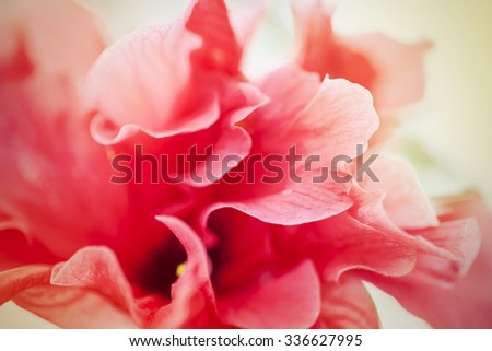 Macro soft focus shot,abstract background of closeup of beautiful red flower