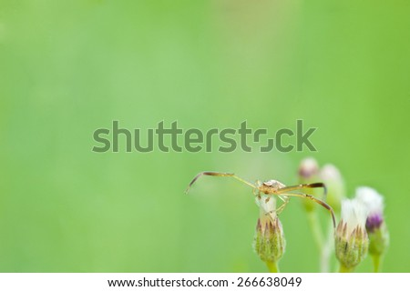 macro spider on flower - stock photo