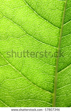 macro structure of a green leaf - stock photo