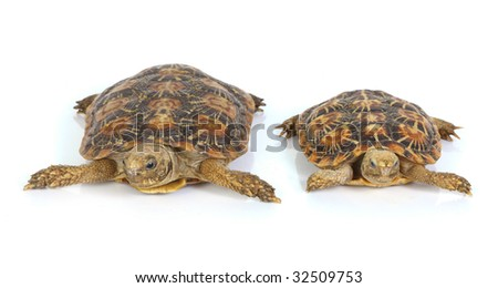 macro studio photo of a tortoise