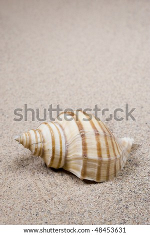 Macro studio shot of beautiful sea shell on a yellow sand. copy-space
