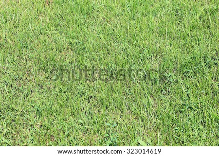 macro texture for background green grass in the meadow in the sunlight - stock photo