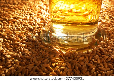 macro view of a beer glass with wheat, grain, barley, malt - stock photo