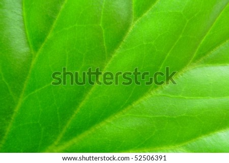 macro view of a green leaf for background