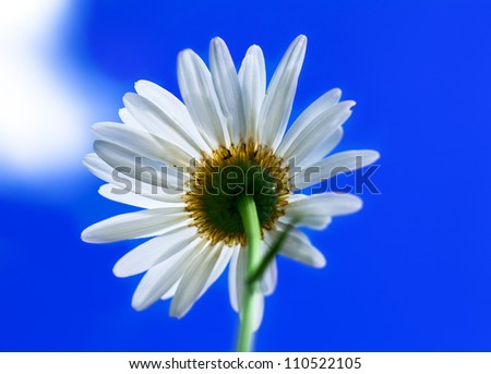 Macro view of single chamomile over sky background - stock photo