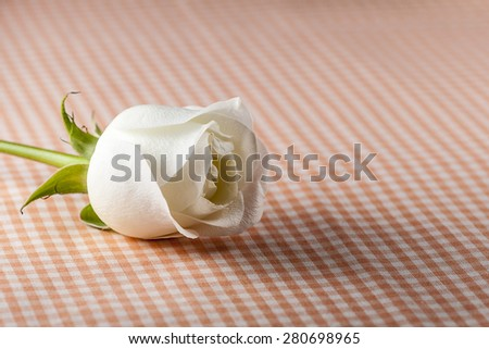 Macro view of white roses on wood (Shallow DOF)