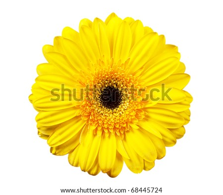 Macro view of yellow flower isolated on the white background - stock photo
