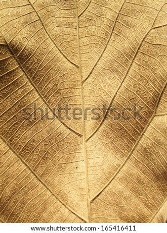 Macro view on textured autumn brown leaf - stock photo