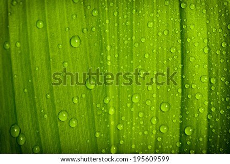 macro water drops on green plant leaf for natural background, wallpaper or backdrop use