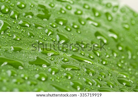 macro water drops on green plant leaf for natural background, wallpaper or backdrop use - stock photo