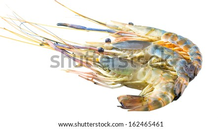 Macrobrachium rosenbergii also known as Giant River Freshwater  Prawn and locally known as udang galah in Malaysia over white background.