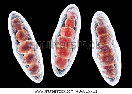 Macroconidia (multi-celled bodies) of fungus Trichophyton mentagropyites, 3D illustration. This microscopic fungus causes athlete's foot (Tinea pedis) and scalp ringworm (Tinea capitus)