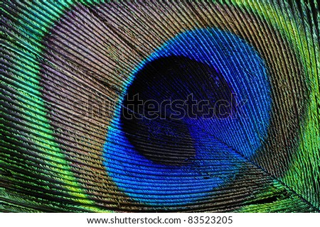 Macrophotograph of a peacock's feather. Diagonal composition, can be used in any orientation.