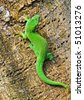 Madagascar day gecko - stock photo