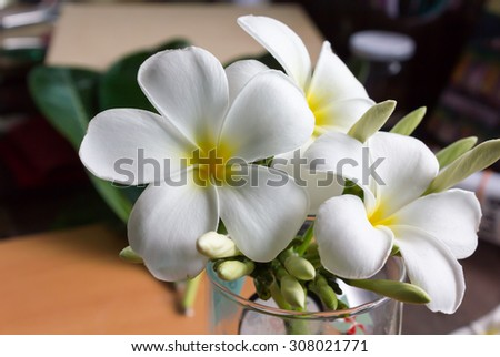made lovely corner in home office with beautiful white flower plumeria or frangipani in a normal glass - stock photo